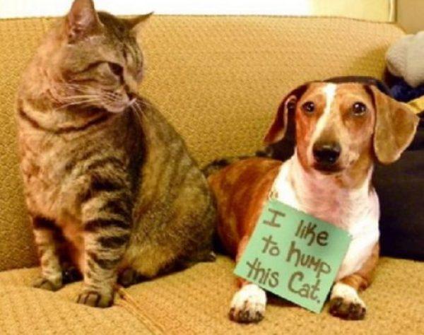 Dog Loves Cat
