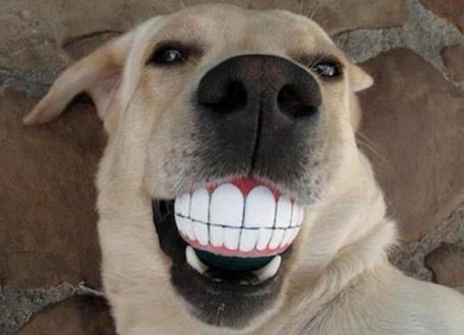 Make sure your dog keeps up with dental hygiene