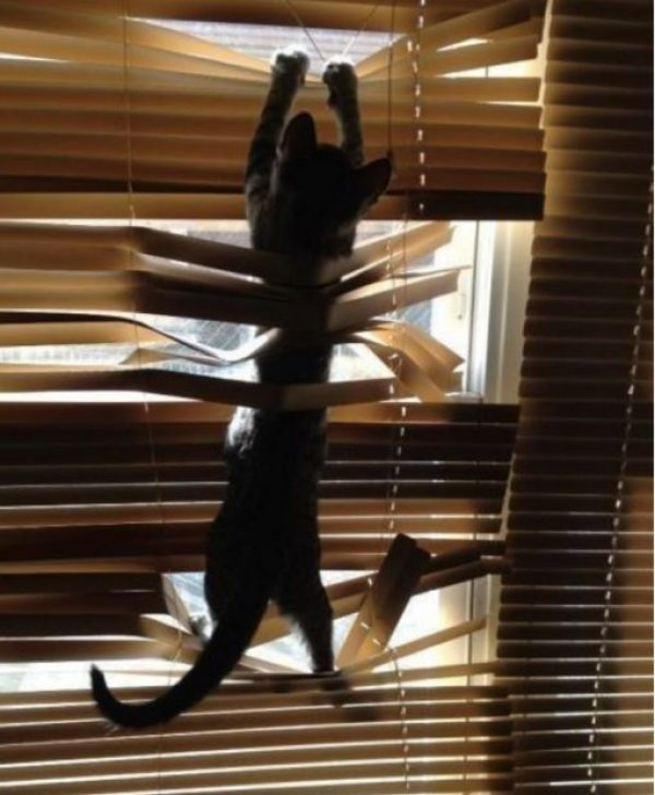 Cat Who Hates Blinds