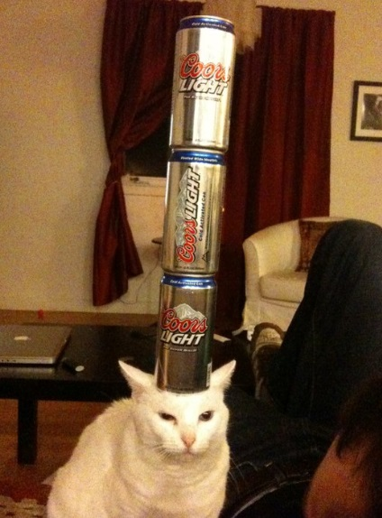 Cat Balancing 3 Cans on Its Head