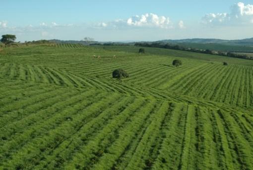 Brazil Coffee Production