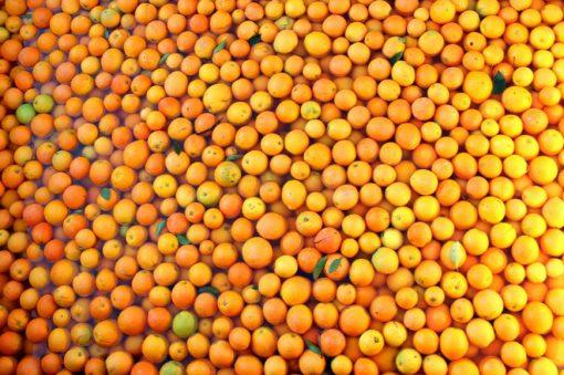 Brazil Orange Production