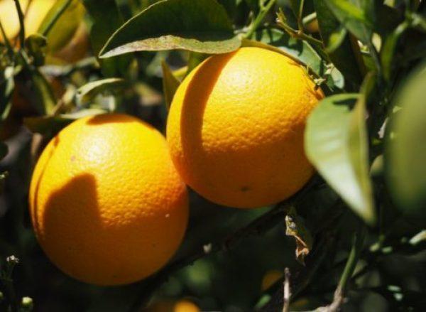 United States Orange Production