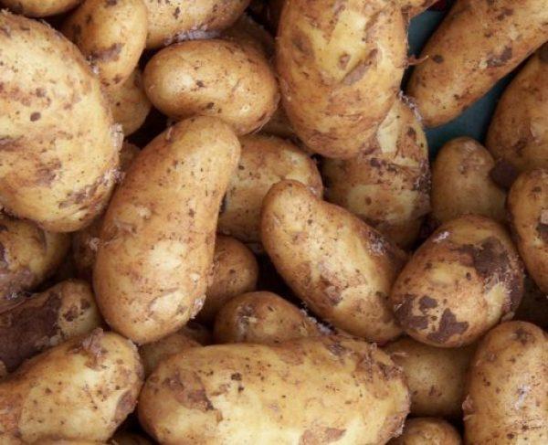 Ukraine Potatoes