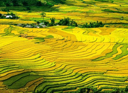China Rice Production