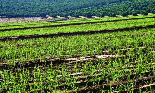 Sugar Plantation France
