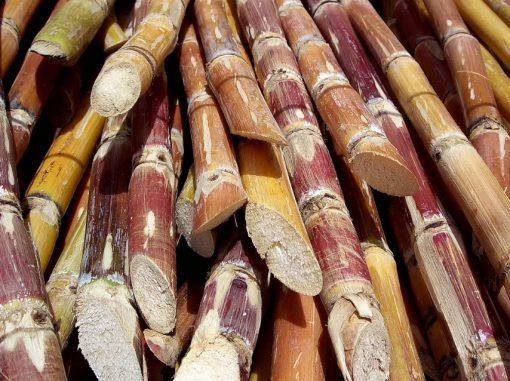 Sugar Plantation Colombia