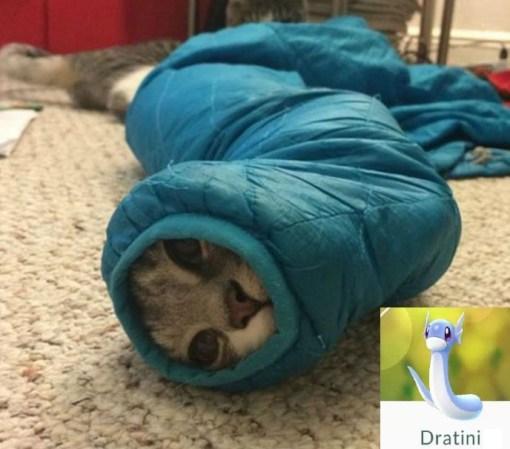 Cat Looks Like a Dratini