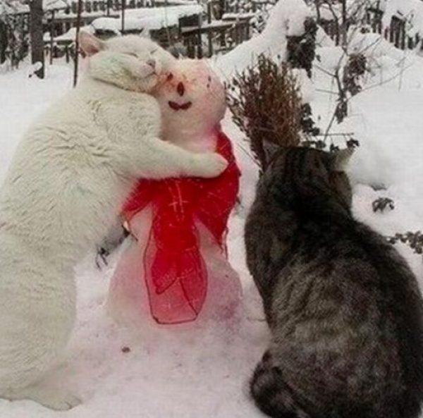 Cat Rubbing on a Snowman
