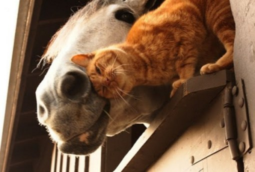 Cat Rubbing on a Horse