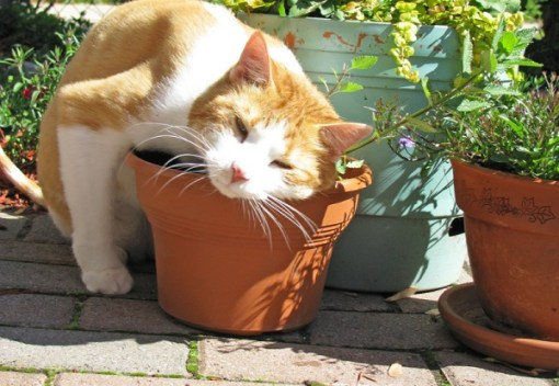 Cat Rubbing on a Pot Plant