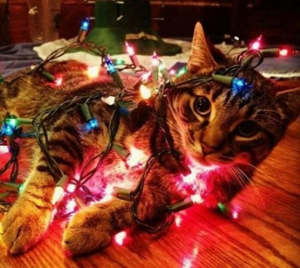 Cat Tangled Up in String Lights