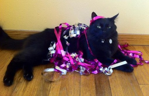 Cat Tangled Up in Party String