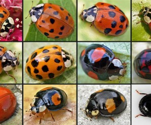 Ten Amazing Types of Ladybird and Where to Find Them