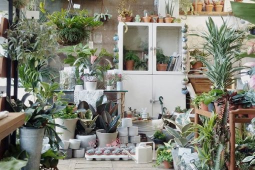 The 10 Most Popular Houseplants in the UK