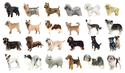 The Top 10 Most Popular Breeds of Dog in the World