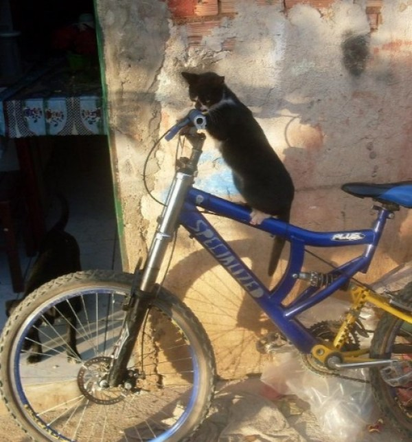 Mountain Biking Cat