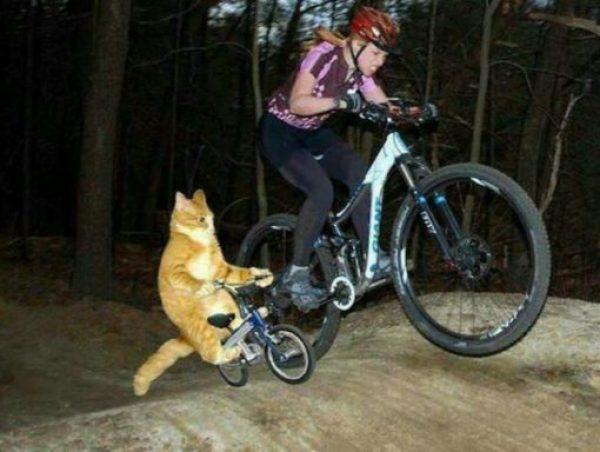 BMX Cat