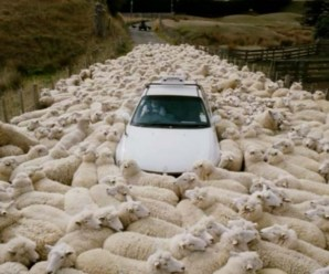 The Ten Countries Where Sheep Outnumber People