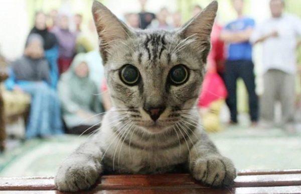 Cat Ruining Photo