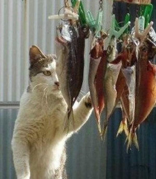 Cat Winning
