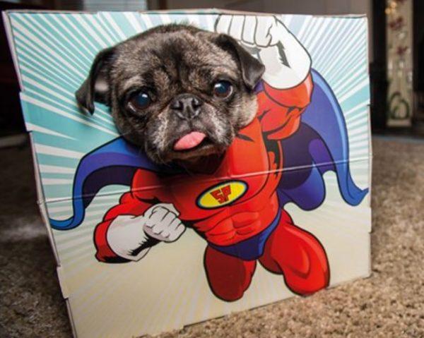 Animal Adventures: Pet Photobooth