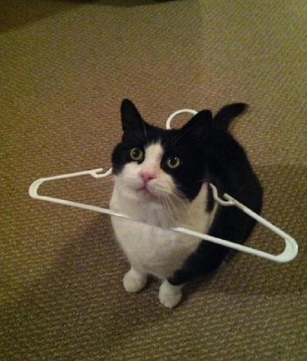 Cat Caught in a Coat Hanger