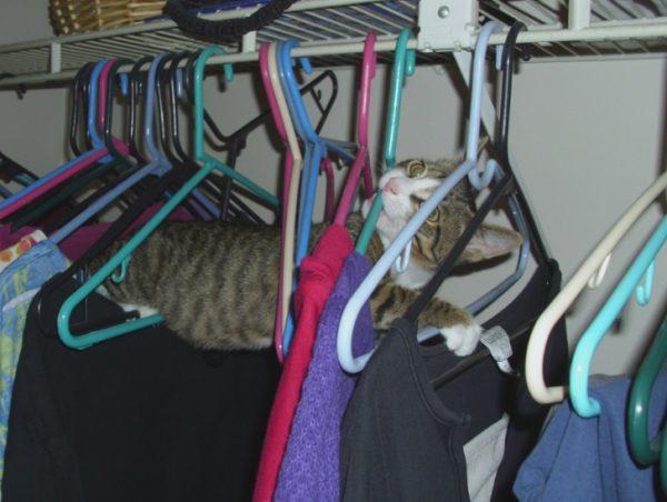 Cat Playing in Coat Hangers