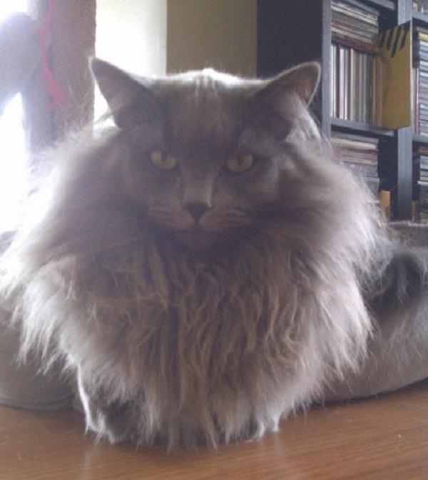 Cat With Beard