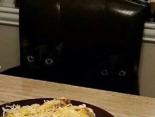Can You Find the Black Cat?