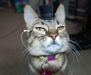 Ten Super Rich Dapper Cats Wearing Top Hats