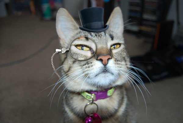 Ten Super Rich Dapper Cats Wearing Top Hats