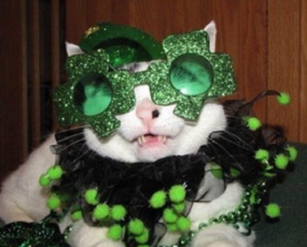 Cat Wearing Crazy Glasses