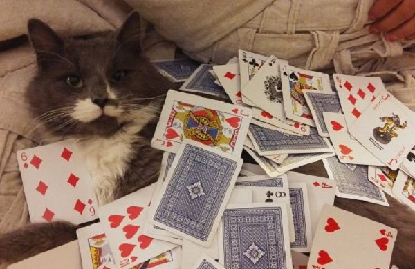 Cat Covered in Playing Cards