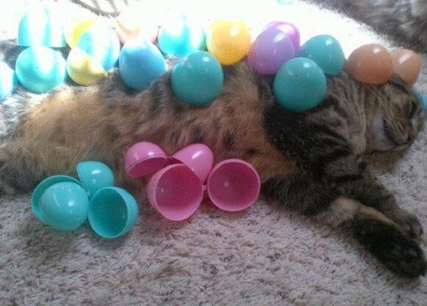 Cat Covered in Plastic Eggs