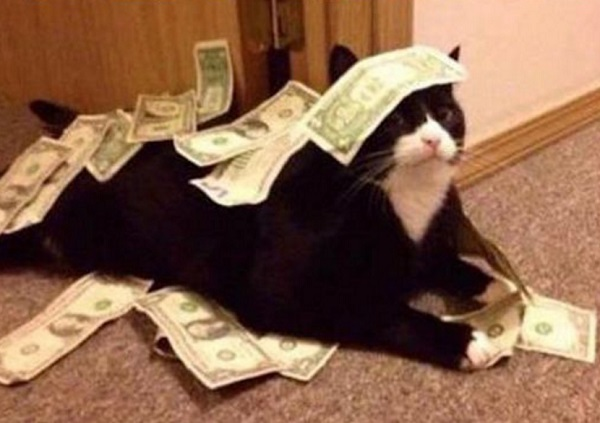 Cat Covered in Money