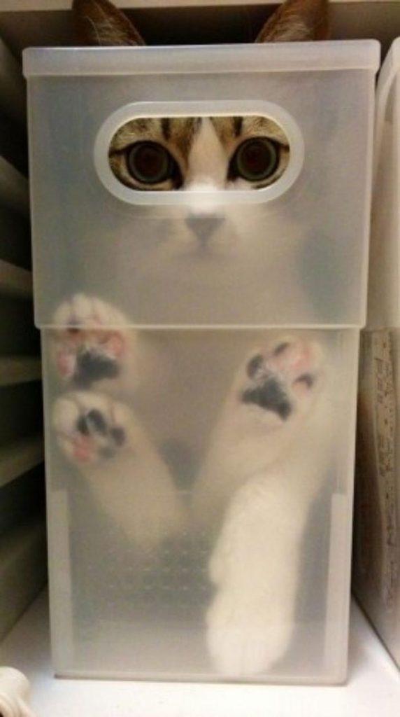 Cat in a Storage Tub