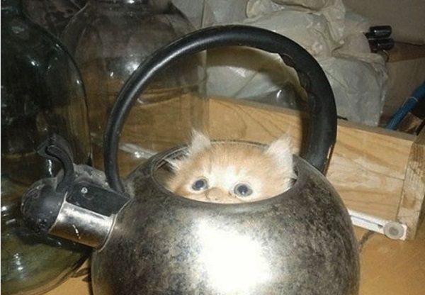 Cat in a Kettle