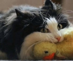 Ten Terrifying Cats Attacking Their Toy Plushies