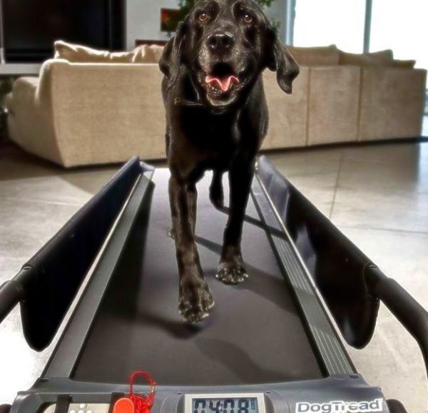 DogTread Treadmill