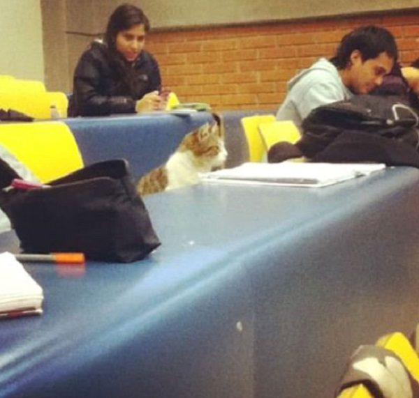 Cat at University