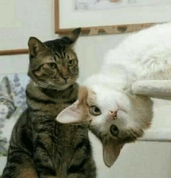Cat With Their Douchebag Friend