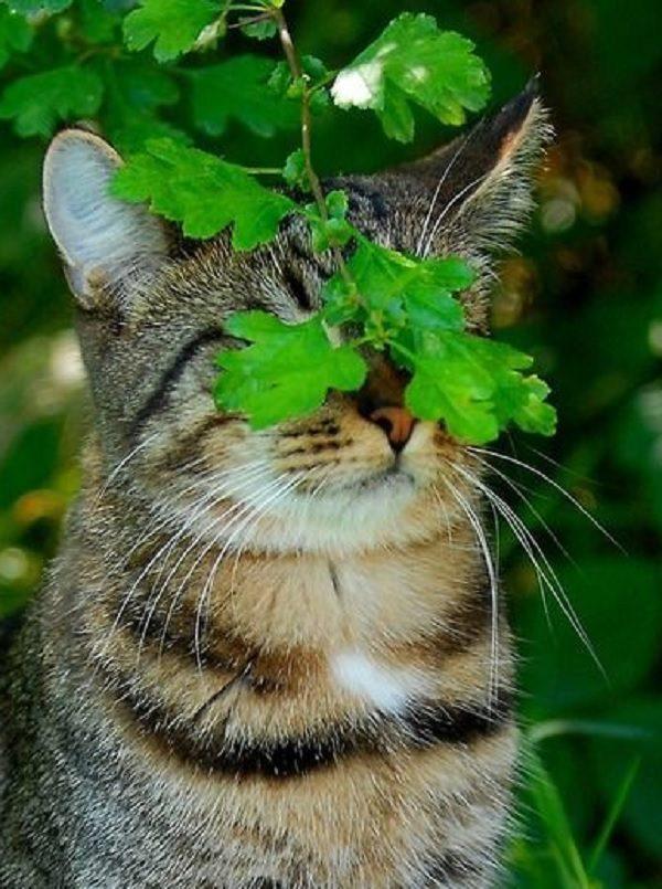 Cat Hiding Under Leaves