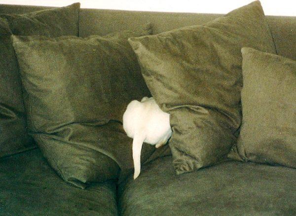 Cat Hiding In a Sofa