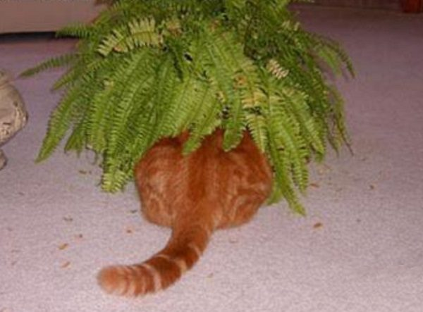 Ten Clearly Visible Cats Who Suck at Hide and Seek