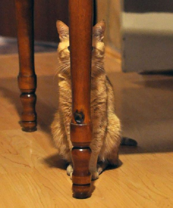 Cat Hiding Behind Table Leg