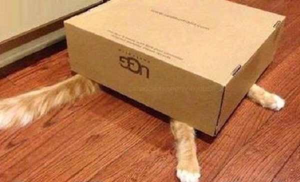 Cat Hiding Under Box