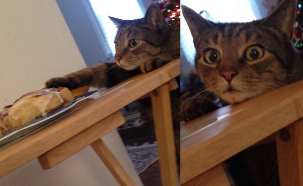 Cat About to Steal Food