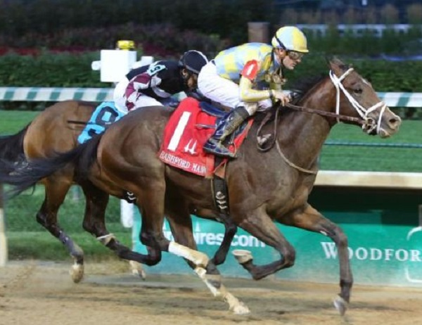 Empire Glory Thoroughbred Racehorse