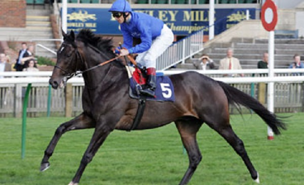 Jalil Thoroughbred Racehorse
